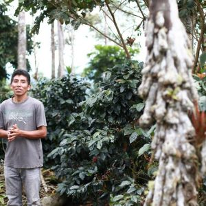 ORGANIC PERU PICHANAKI  </br><b> Cacao / Nutty Syrup / Licorice </b>