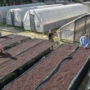 HONDURAS SHB </br><b> Toffee / Chocolate / Caramel </b>